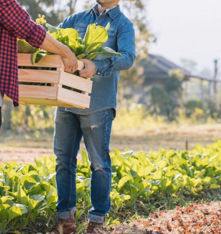 Çiftçilerin Ana Gelir ve Gider Kalemleri Nelerdir?