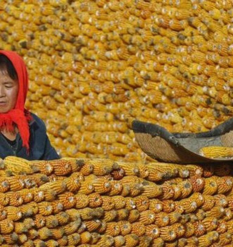 Çin'den yerel hükümetlere tahıl stoklarını artırma çağrısı