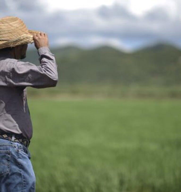 Küresel gıda fiyatları 10 aydır aralıksız yükseliyor