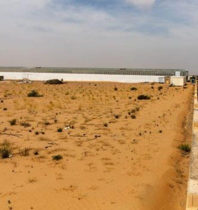 Birleşik Arap Emirlikleri, çölde tarımla gıda üretimini 3 katına çıkaracak