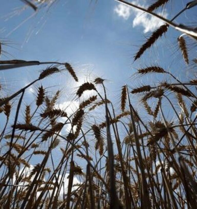 Ukrayna-Rusya gerilimi gıda enflasyonunu artırabilir