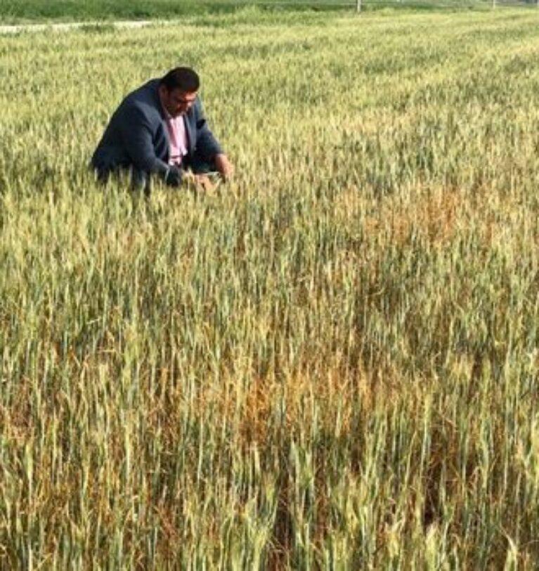 Kuraklık, Doğu ve Güneydoğu Anadolu çiftçisinin kabusu oldu