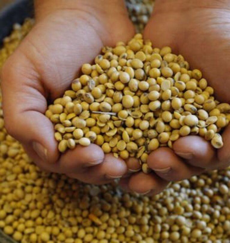 Soya fasulyesi ve mısır fiyatları 8 yılın zirvesinde