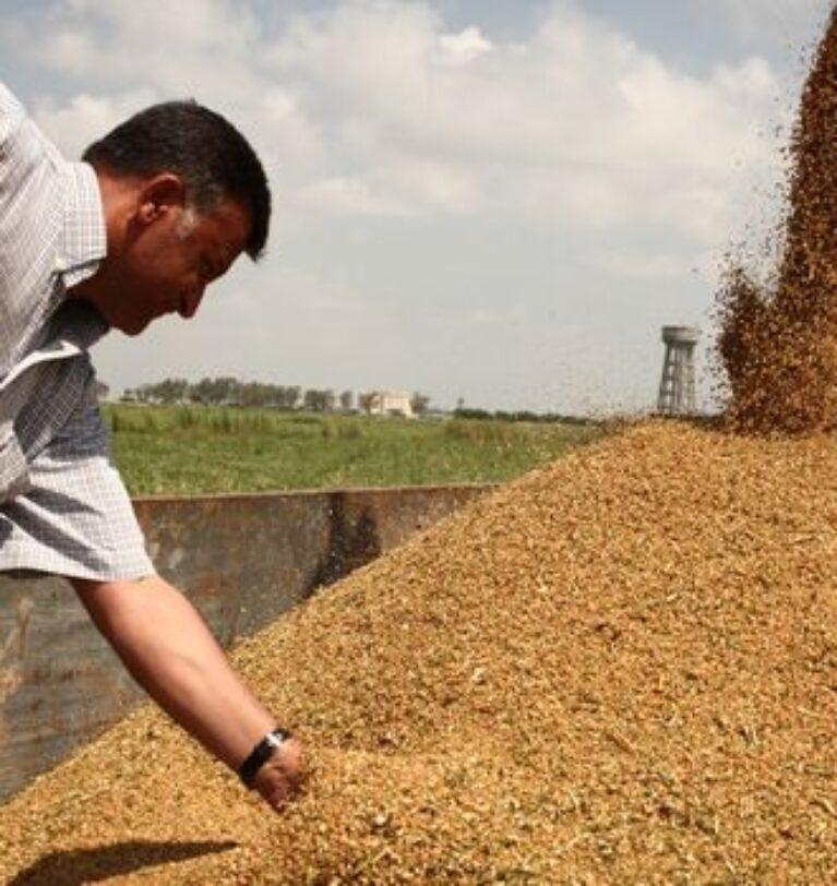 Çiftçi, buğday maliyetini hesaplayıp fiyat beklentisini açıkladı