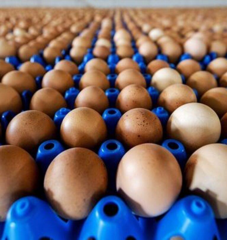 """""""Yumurta üreten sayısı azalıyor, işletmelerde atıl kapasite oranı artıyor"""""""