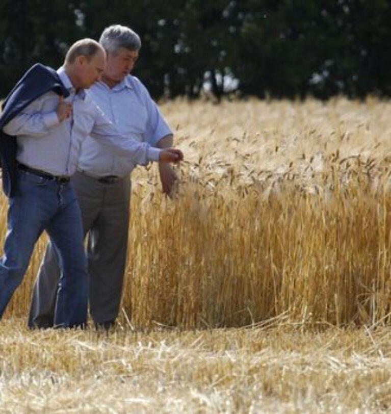 Rusya, buğday ve mısır ihracat vergisini yeniden artırıyor