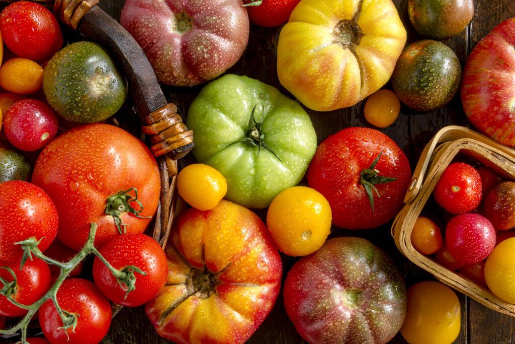 Farklı domates çeşitleri