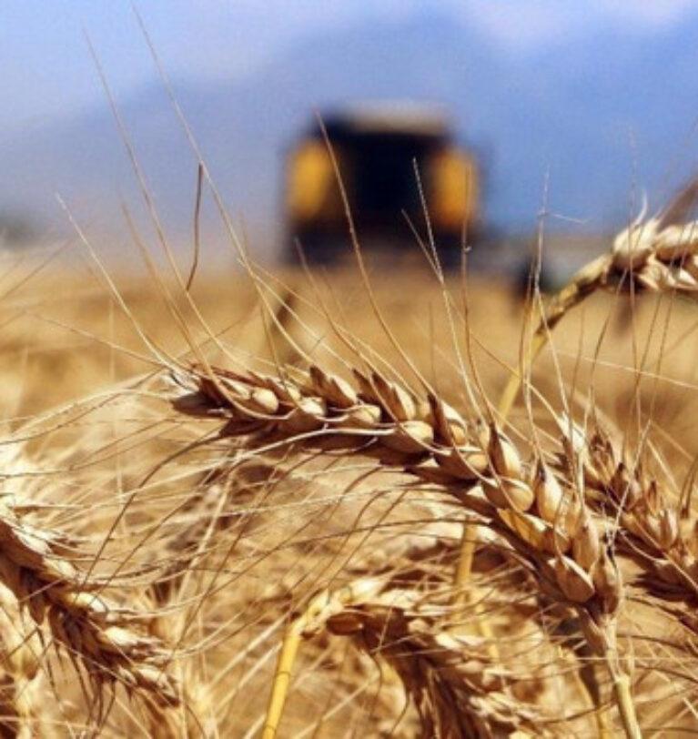 TMO'dan 395 bin ton ekmeklik buğday ithalatı