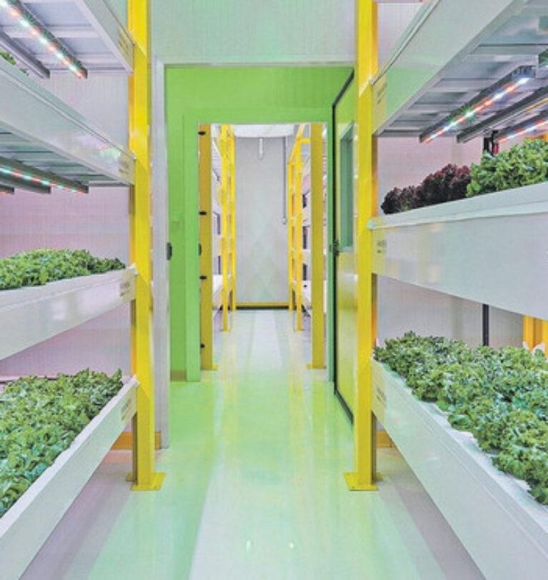 Gıda krizinin çözümü bitki fabrikaları mı?