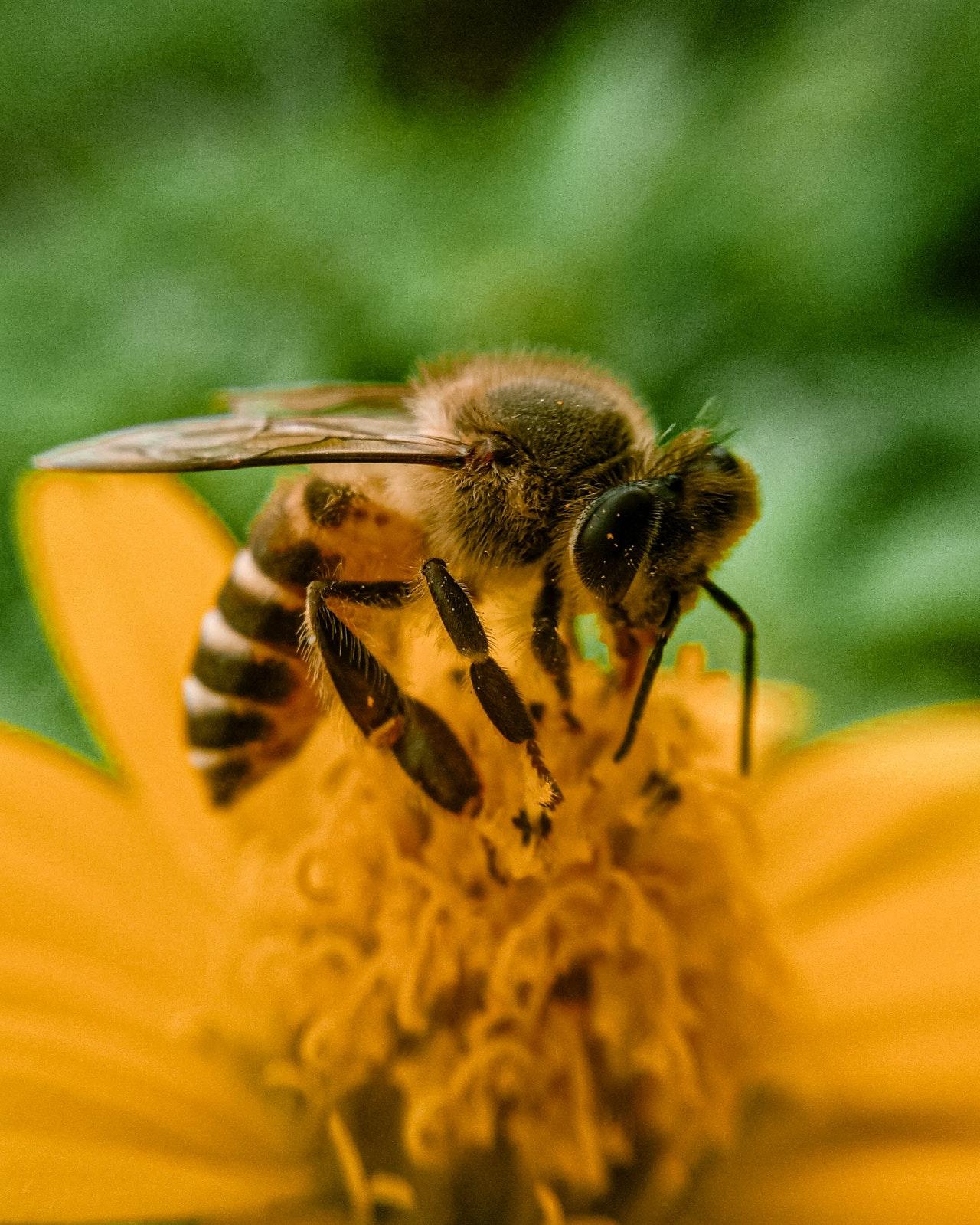 Arı görseli - arıcılık