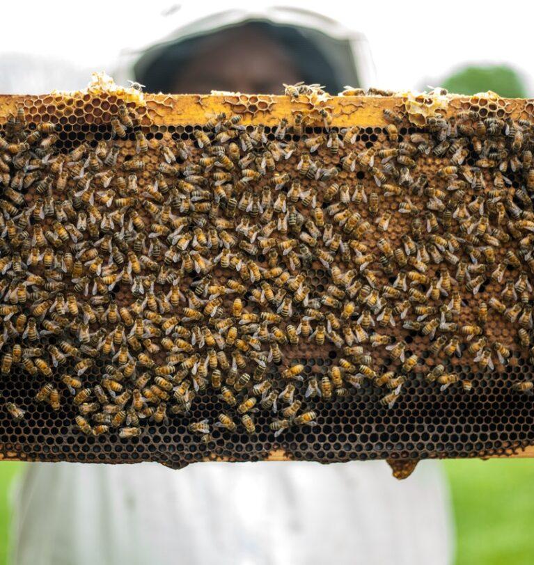 Arıcılık Nedir ve Nasıl Yapılır ? Ülkemizde Arıcılık Ekonomisi Nasıldır ?
