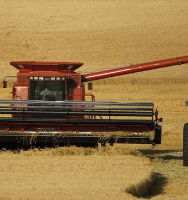 2 iklim olayı buğday fiyatlarını yükseltti