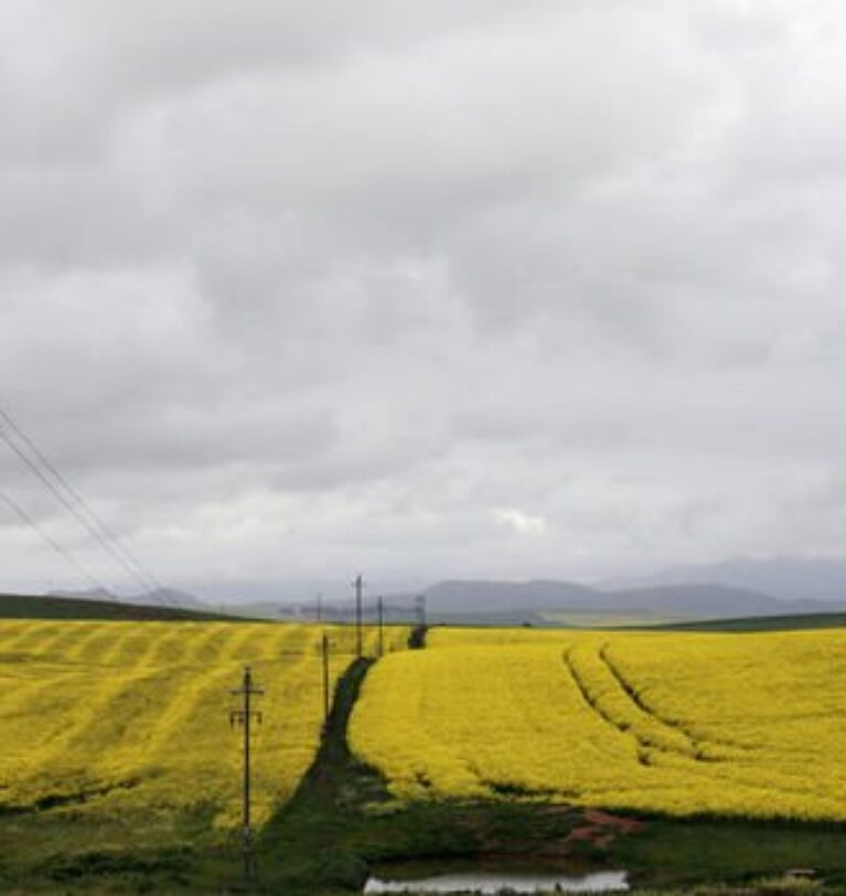 Küresel tarım sübvansiyonları iklim krizini ağırlaştırıyor