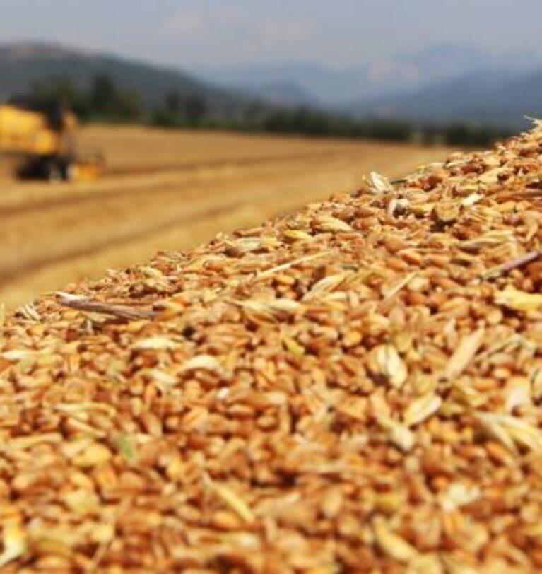 Çiftçi buğdayın kilogram maliyetini hesapladı: 4,25 TL